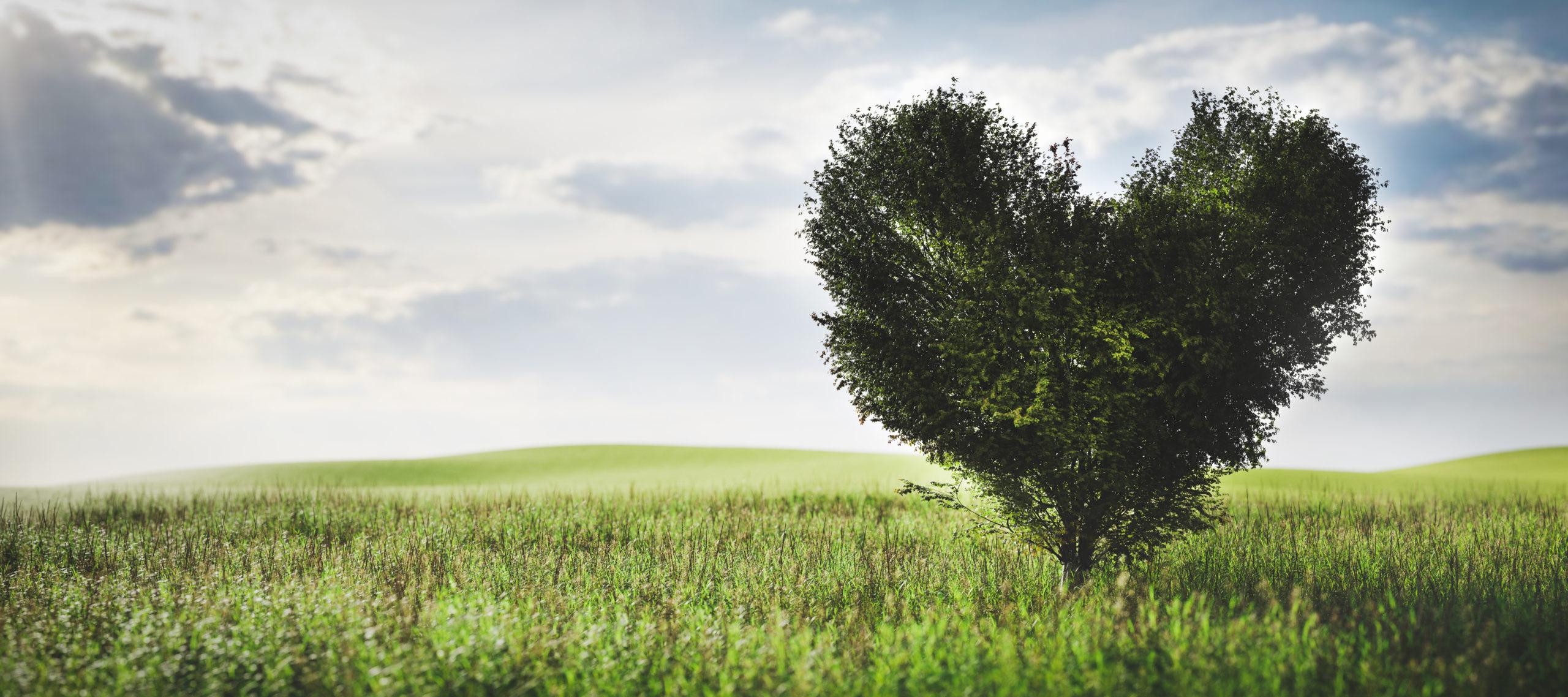 Lutopie - arbre coeur